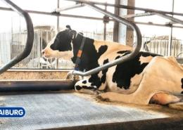 Liegeboxen für Kühe