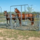 Weidezaun für Pferde