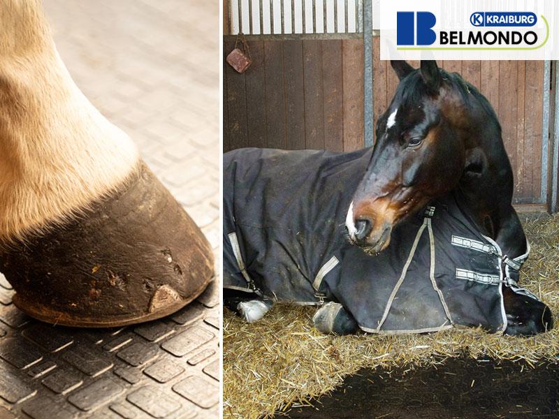 Kraiburg Stalltechnik für Pferde