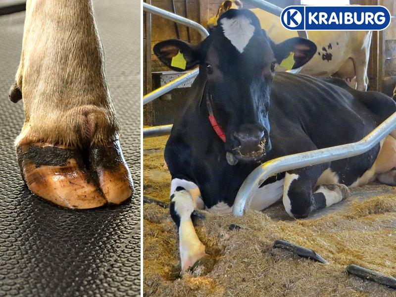 Gummimatten für Kühe