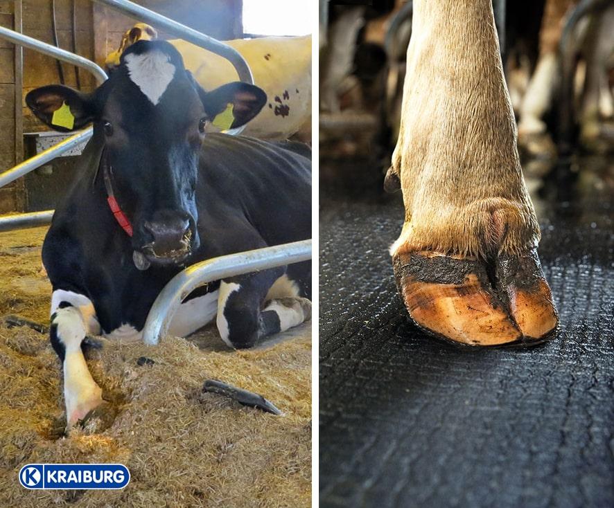 Liegematten für Kühe