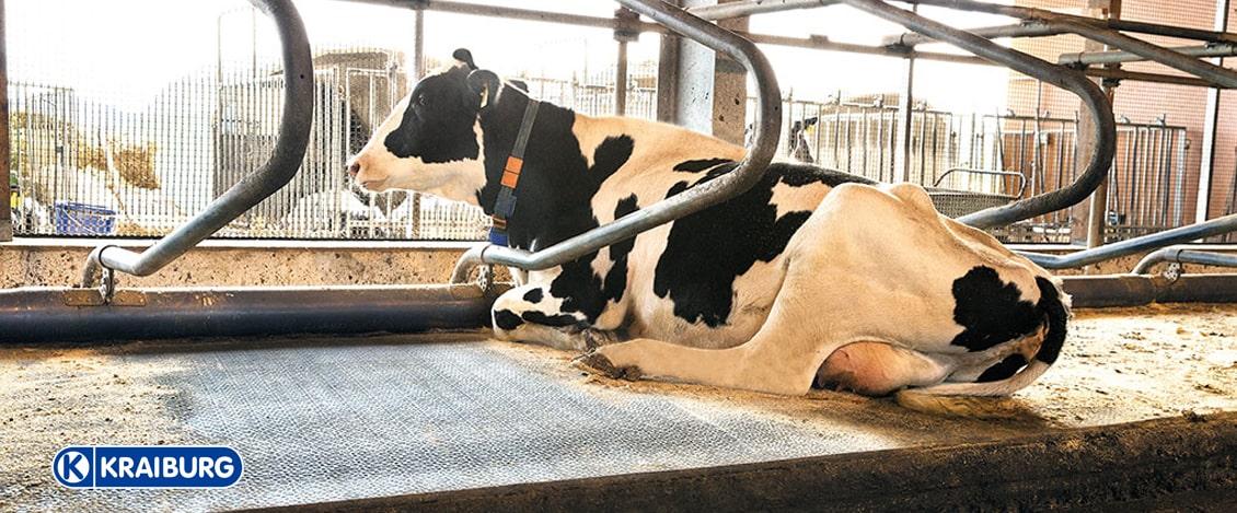 Liegematten für Kühe Slider